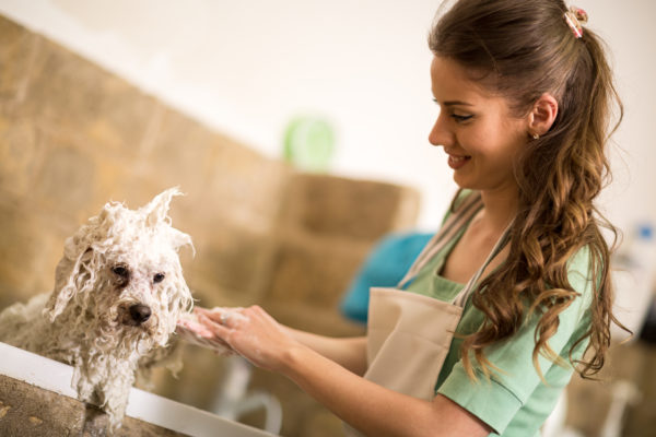 Starting a Pet Grooming Business: a Primer for Success