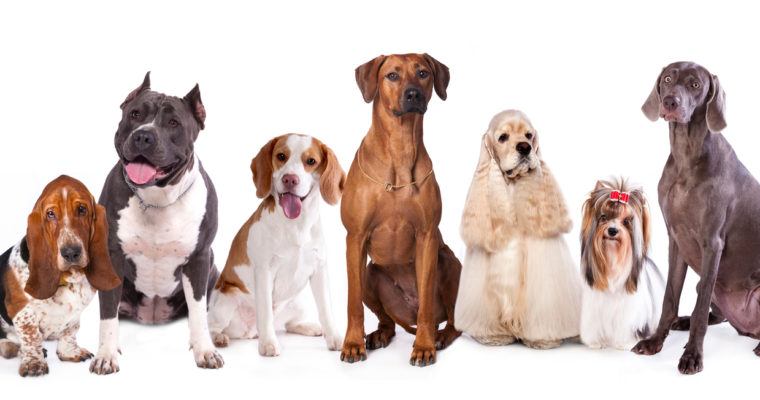 Understanding your Pet Grooming Customers: The four-legged clients