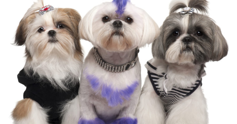 Understanding Your Pet Grooming Customers: The Pet Parents