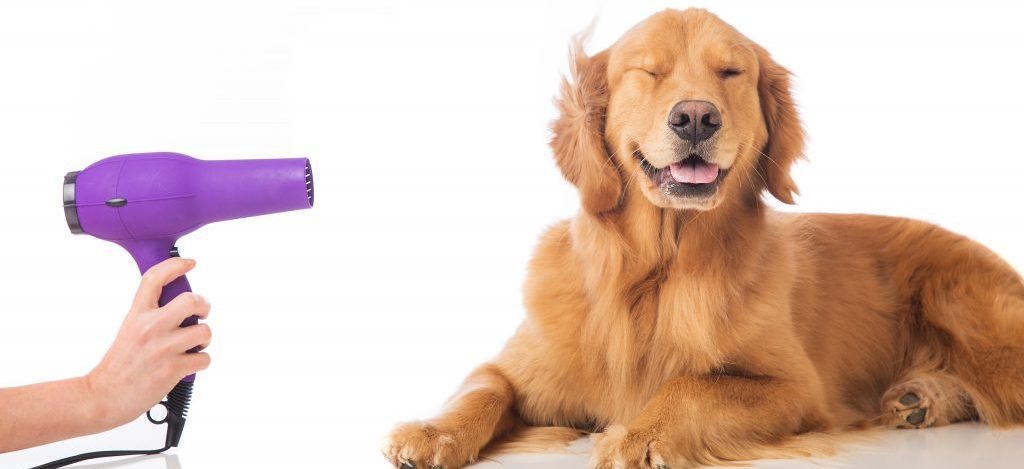 A Groomer's Guide to Business